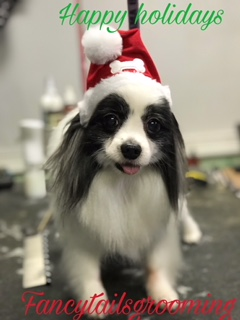 fancytailholiday